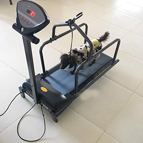 QNMM Pet Treadmill Animal Treadmill Dog Supplies Puppy Treadmill