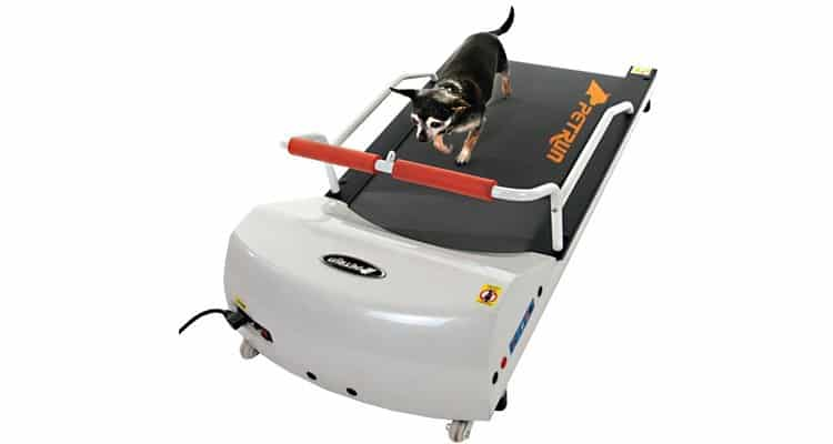 small dog on gopet pr700 treadmill