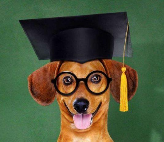 Dog grooming courses