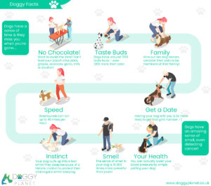 Dog facts infographic