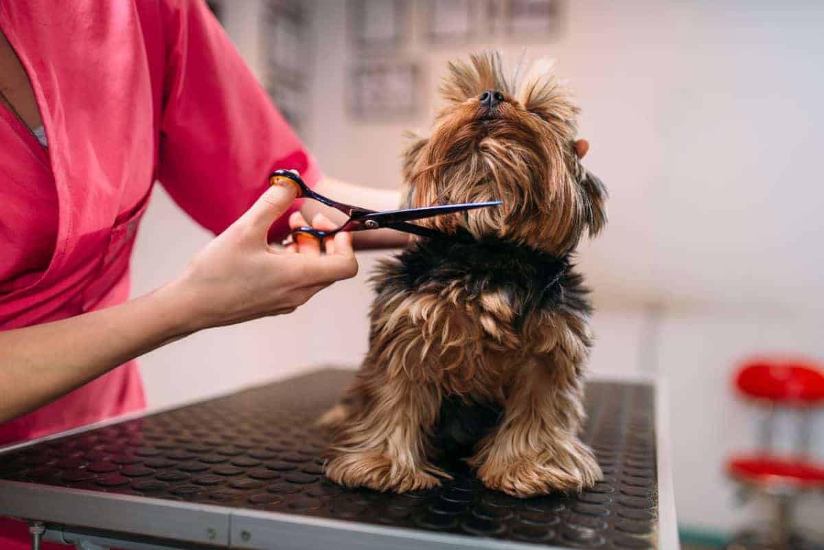 Dog on a dog grooming table